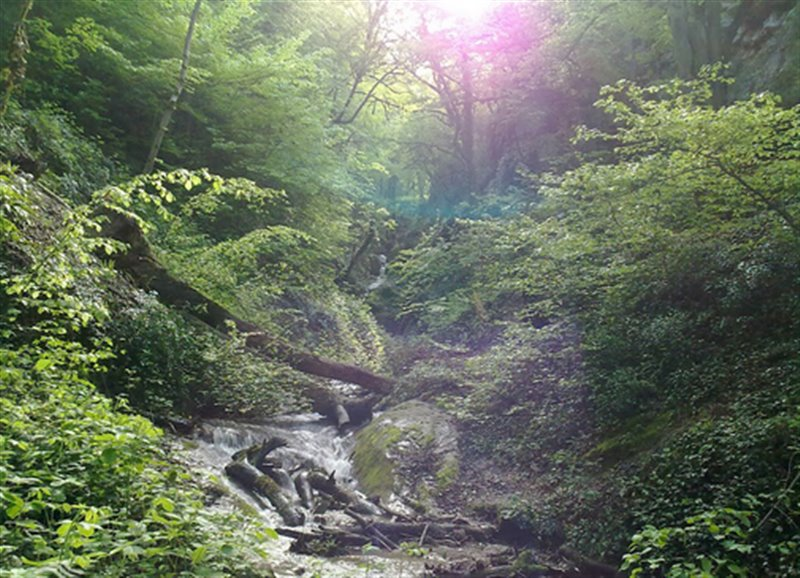 2556 آبشار چلم زرین گل