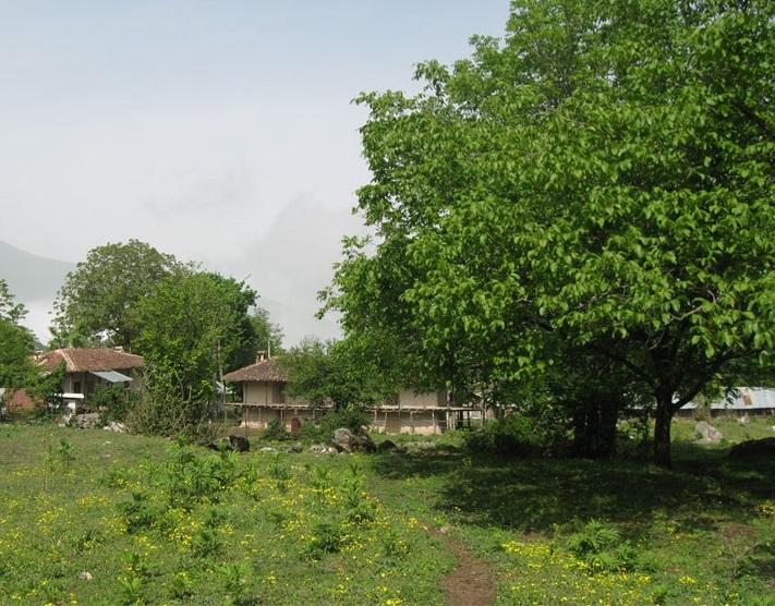 روستای چلی علیا