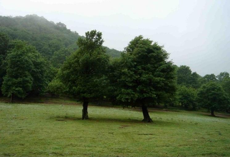 2698 پارک جنگلی شبنم