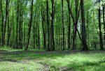 جنگل جهان مورا