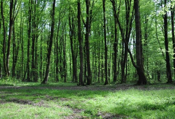 2703 جنگل جهان مورا