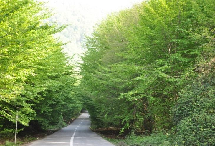 2705 جنگل جهان مورا