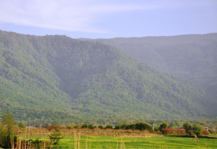 2708 جنگل جهان مورا