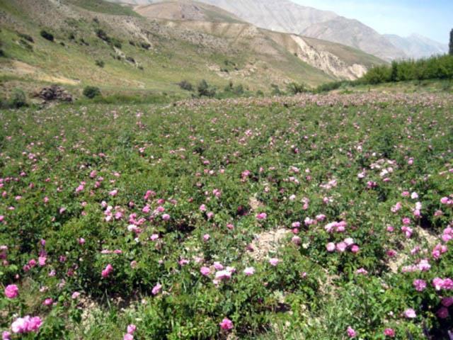 3072 روستای شیخ علی
