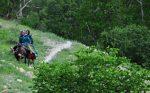 روستای آب ملخ