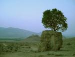 روستاي چهارقلات