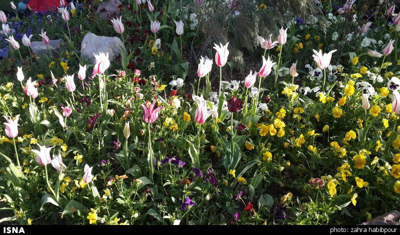 214 ثبت جهانی mahallat flora fair به عنوان برند نمایشگاه گل محلات