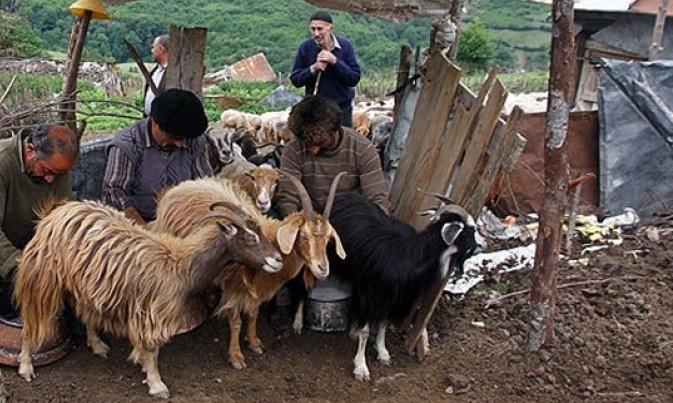 آئین سنتی شیردوشان