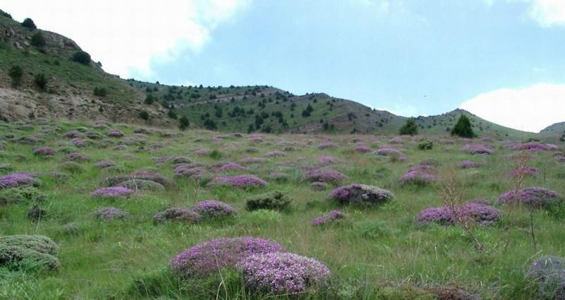 1102 پارک جنگلی چهلمیر