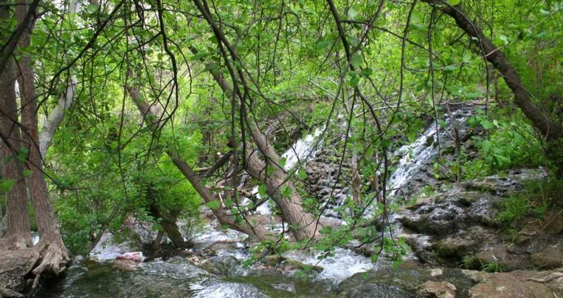 1103 پارک جنگلی چهلمیر