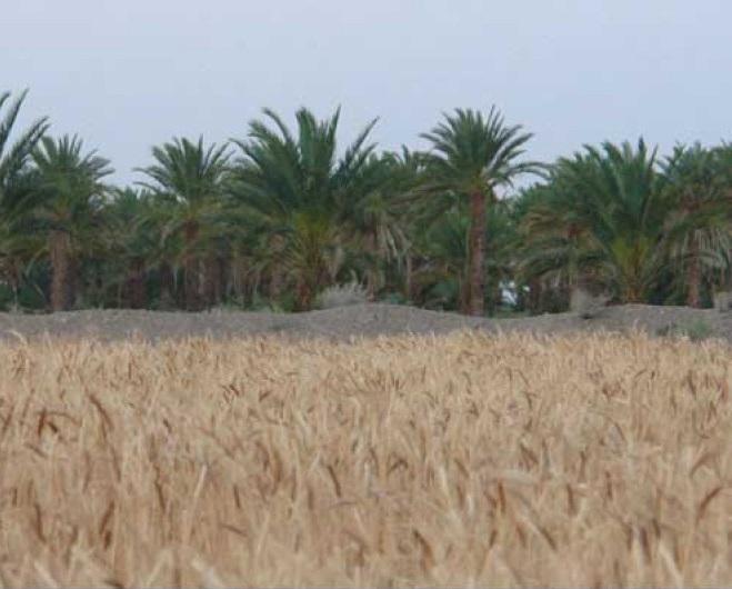 1507 روستای آبادان ( ایرانشهر )