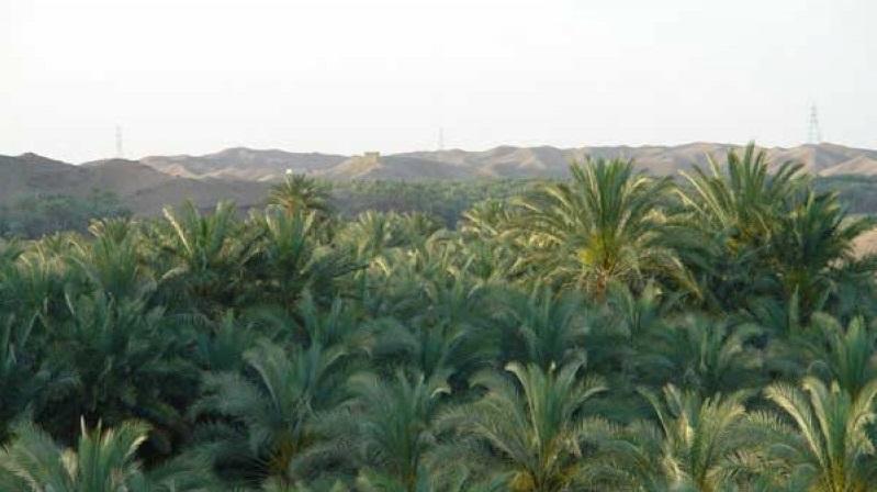 1508 روستای آبادان ( ایرانشهر )