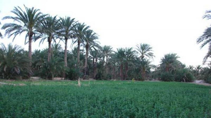 1509 روستای آبادان ( ایرانشهر )
