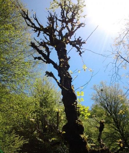 طبیعت سردانسر