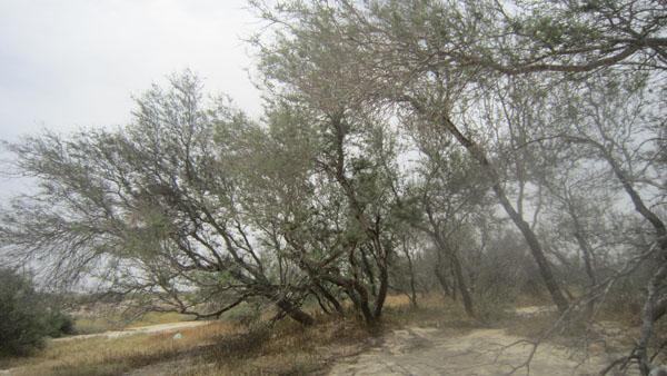 روستای زيراب