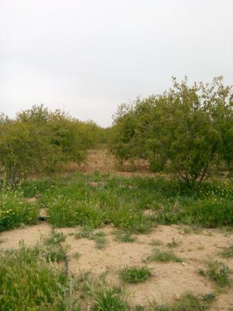 27_big روستای تنگ طه