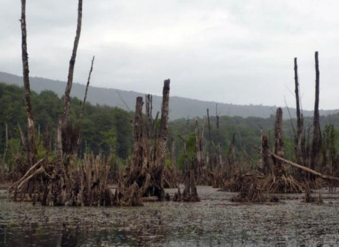 تالاب ارواح در میان جنگل