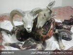 عاملین شکار دو قوچ و میش وحشی در خنج