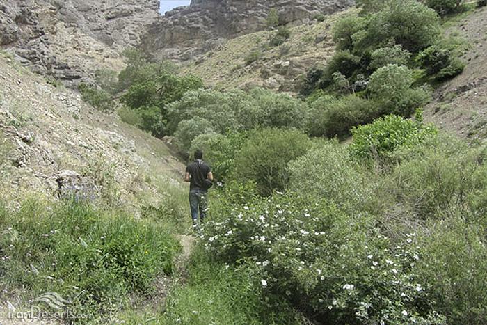 آبشار سیجان