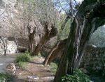 روستای باباعلی