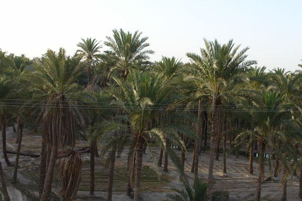 121 روستای دامن