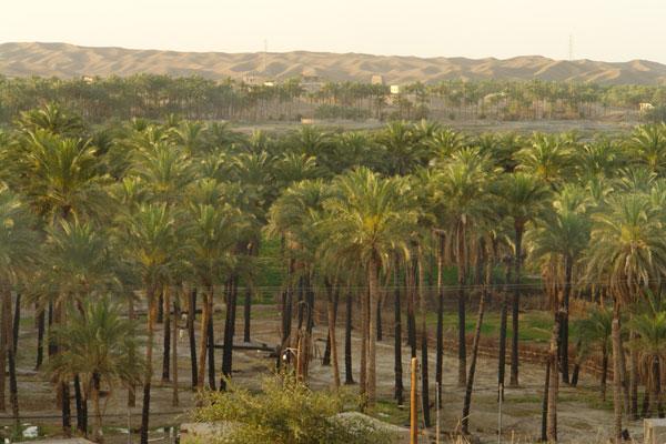 126 روستای دامن