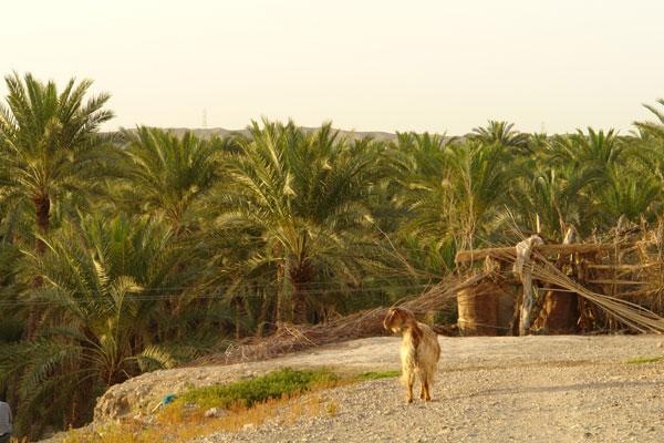 127 روستای دامن