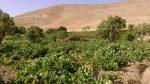 روستای چوزه