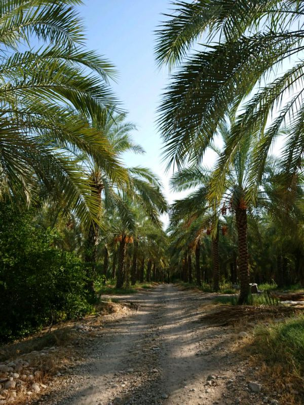 روستای بورکی