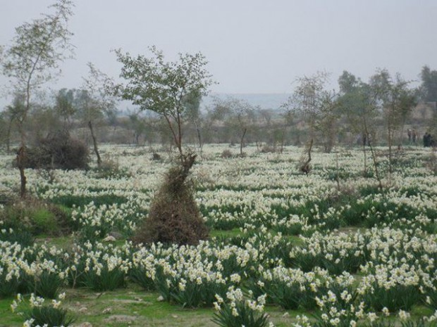 روستای باغدشت کازرون