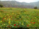 روستای چیتی