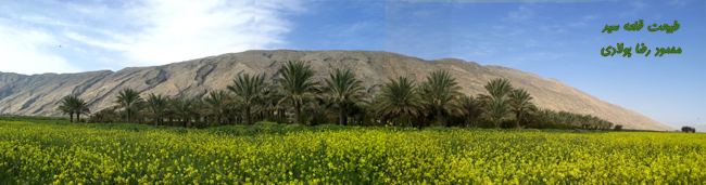 34817_493 روستای قلعه سید