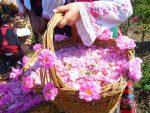 آغاز نخستین جشنواره گلابگیری در تهران