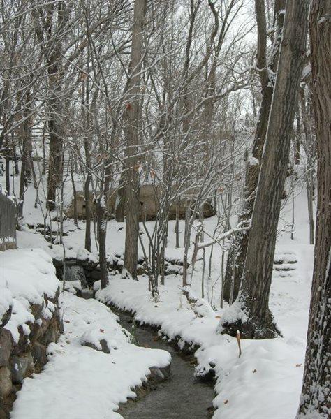 1263 پارک جنگلی مرخونی