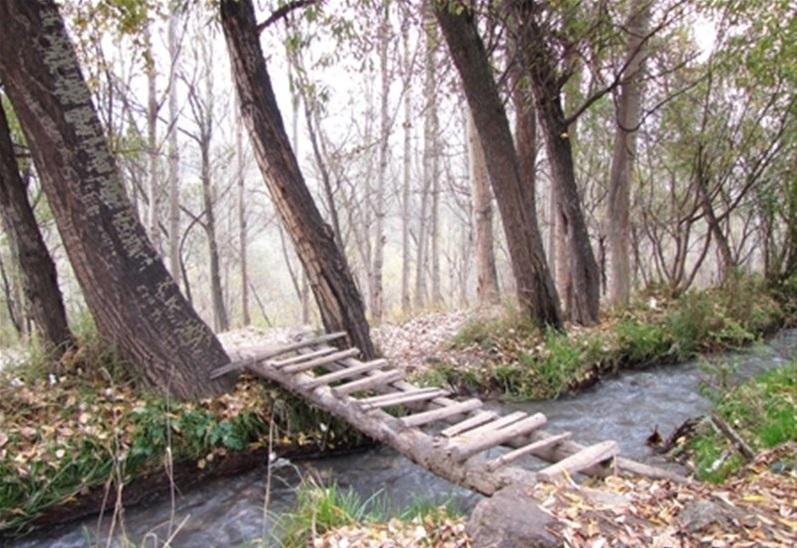 پارک جنگلی خیاو چایی