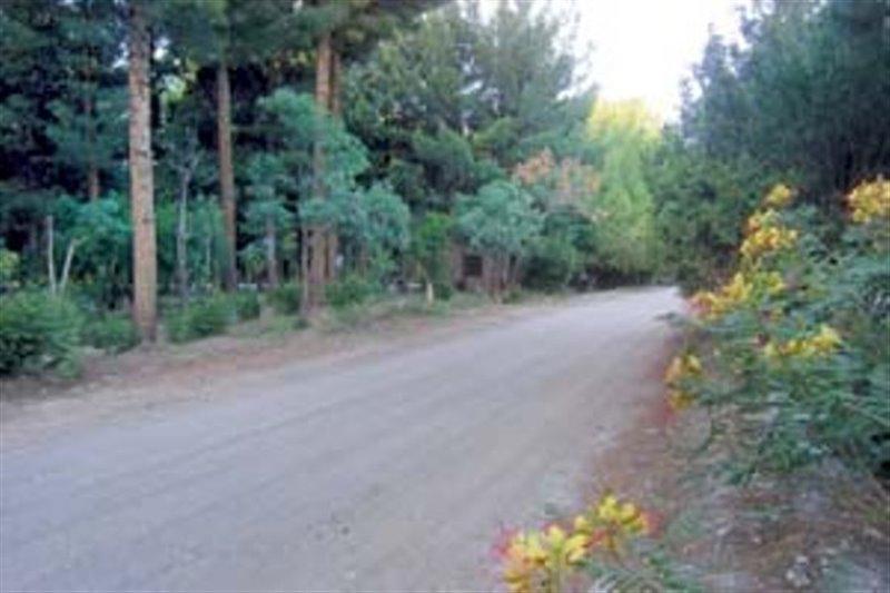 1447 پارک جنگلی بیرجند