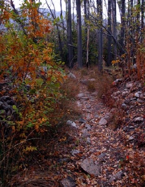 1452 پارک جنگلی استهبان