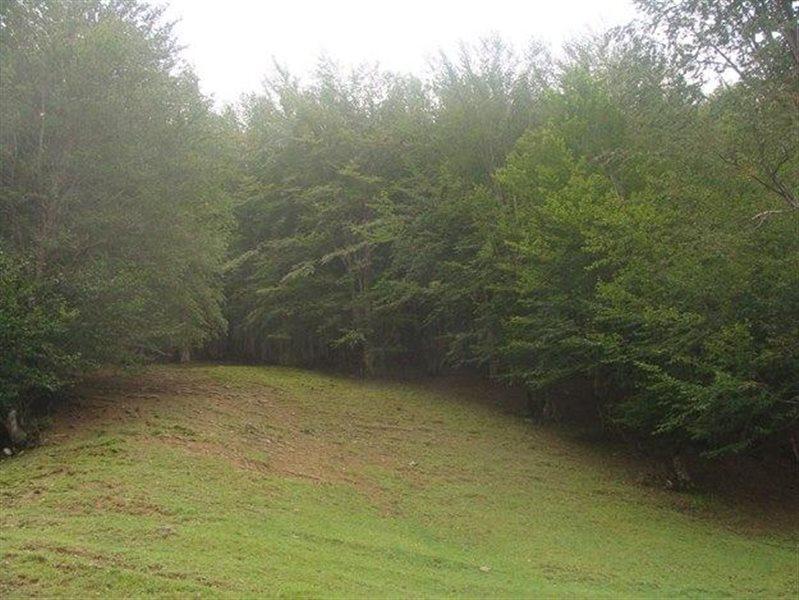 پارک جنگلی ماسوله