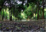 پارک جنگلی دزفول