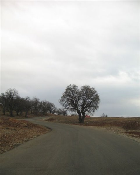 1692 پارک کوهستان یاسوج