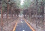 پارک جنگلی ساوه