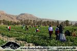 روستای زینل آباد