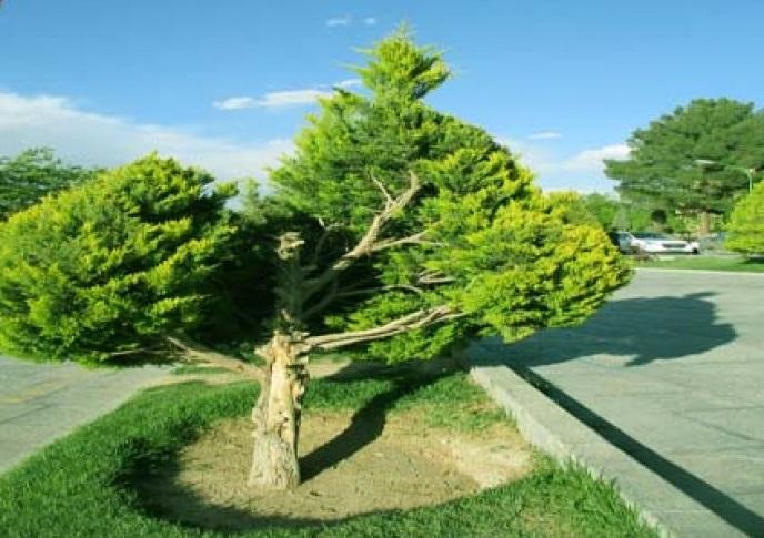 پارک ایثارگران اصفهان