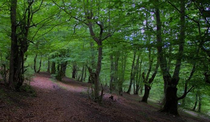 1159 جنگل هلی دار