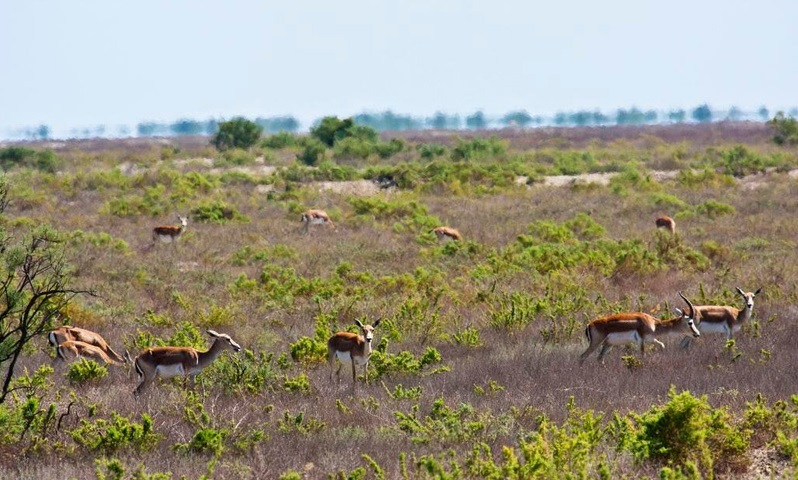 عکس های زیبامنطقه حفاظت شده گلول و سرانی شیروان(گلیل)