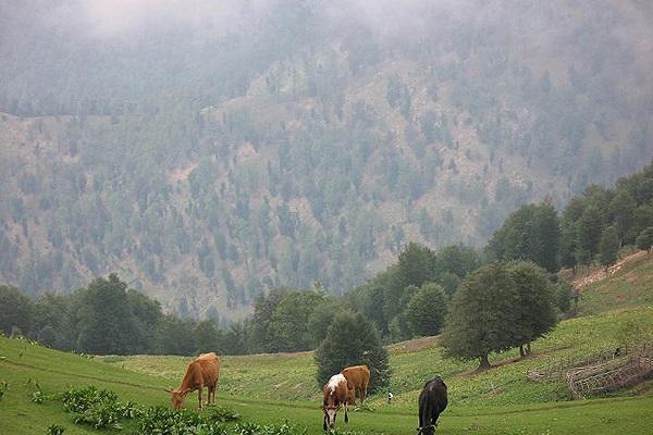 127 منطقه حفاظت شده گشت رودخان و سیاه مزگی
