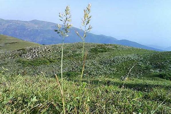 128 منطقه حفاظت شده گشت رودخان و سیاه مزگی