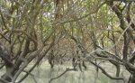 منطقه حفاظت شده گابریک و جاسک
