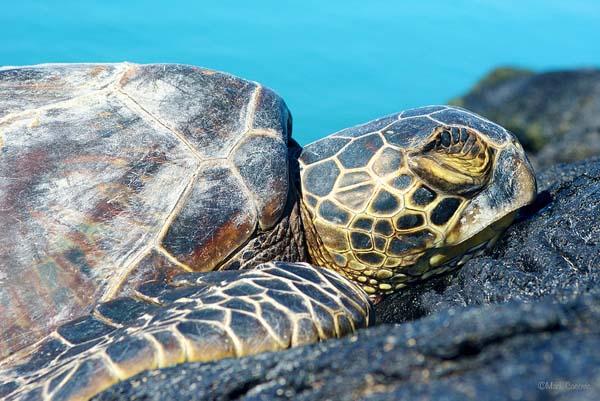271 جزیره شیدور