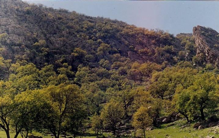 منطقه حفاظت شده کوه دیل